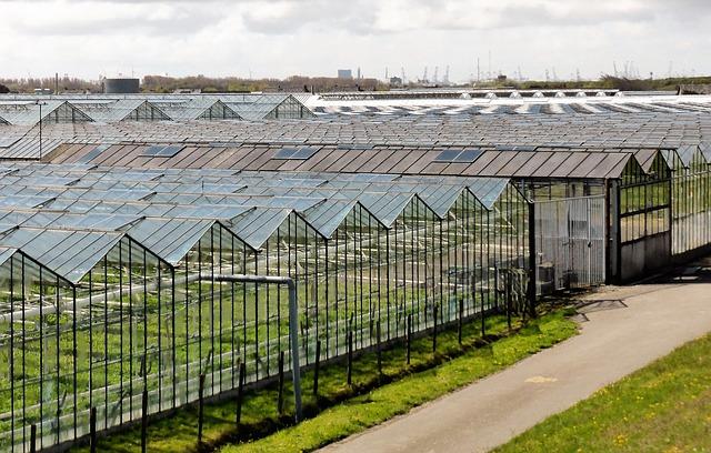 Szklarnie informacje z Holandii