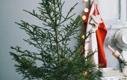Świąteczno drzewko w Holandii? Sprawdź gdzie i za ile