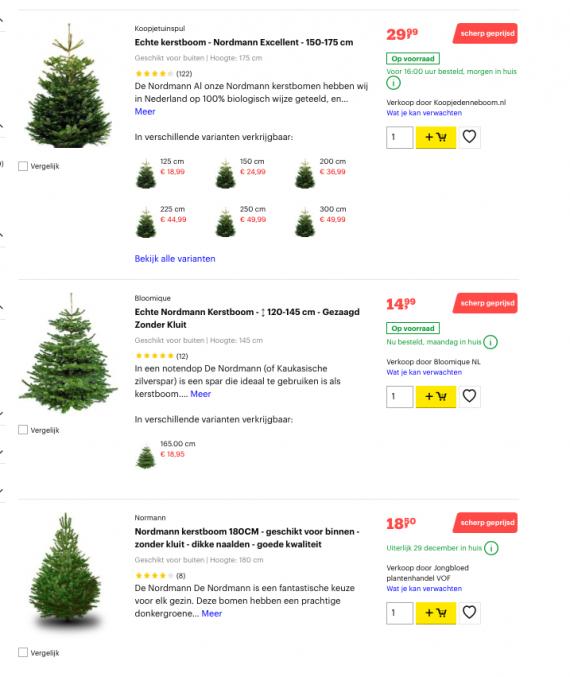 Świąteczne drzewko w Holandii? Sprawdź gdzie i za ile