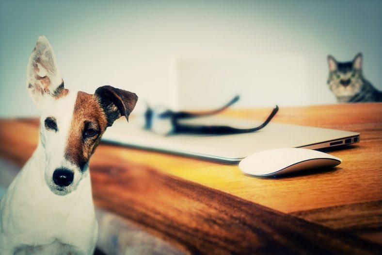 braki psów i kotów w Holandii