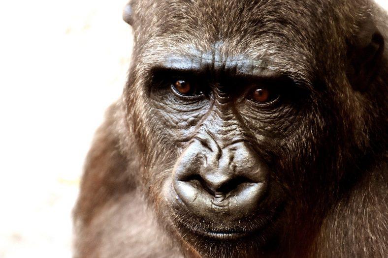 Zwierzęta w zoo zginą