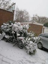 Zima NL 2021