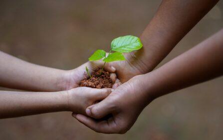 darmowe drzewko dla mieszkańców Hagi