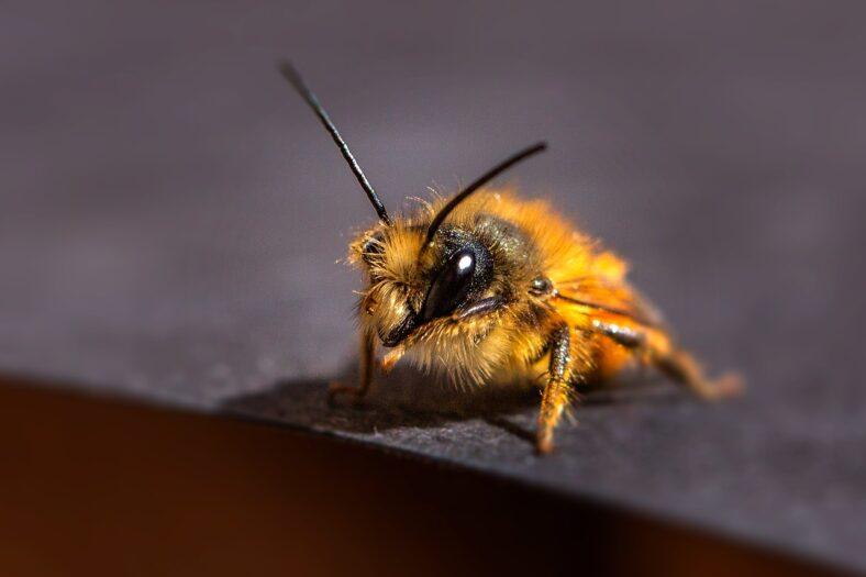 Holendrzy liczą pszczoły