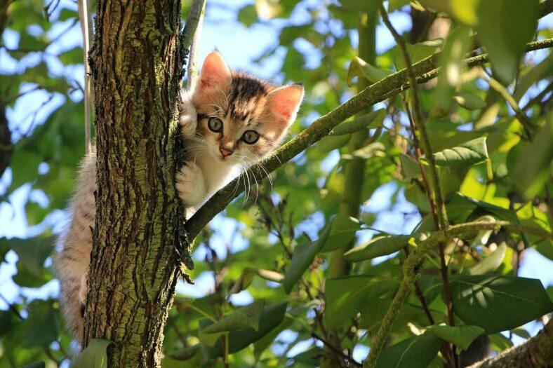 na ratunek kota i jego włąścicielki