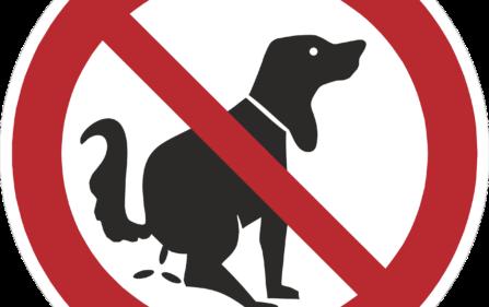 ludzie sprzątają po swoich psach co przyprawia innych o płacz