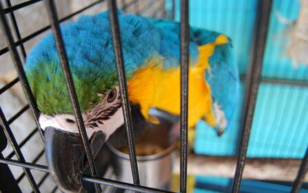 nowe prawo dotyczące zwierząt