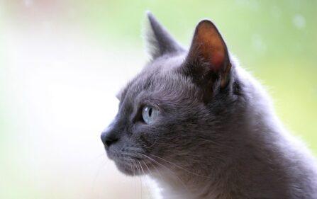 Kot czyli dobro wraca