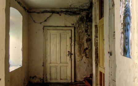 Tragiczny stan mieszkań socjalnych w Holandii