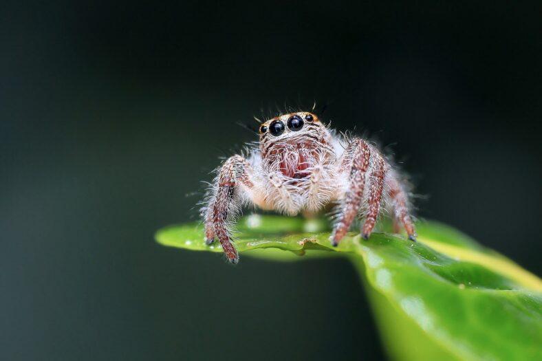 Holendrów problemy z pająkami